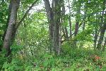 HUGE ACCESS LOT AT LAKE LEANN, HILLSDALE COUNTY